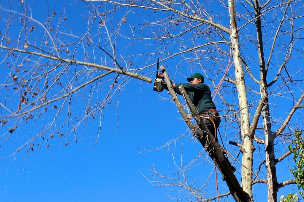 Contact Us-Pembroke Pines FL Tree Trimming and Stump Grinding Services-We Offer Tree Trimming Services, Tree Removal, Tree Pruning, Tree Cutting, Residential and Commercial Tree Trimming Services, Storm Damage, Emergency Tree Removal, Land Clearing, Tree Companies, Tree Care Service, Stump Grinding, and we're the Best Tree Trimming Company Near You Guaranteed!