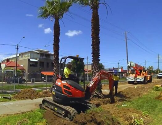 Palm Tree Removal-Pembroke Pines FL Tree Trimming and Stump Grinding Services-We Offer Tree Trimming Services, Tree Removal, Tree Pruning, Tree Cutting, Residential and Commercial Tree Trimming Services, Storm Damage, Emergency Tree Removal, Land Clearing, Tree Companies, Tree Care Service, Stump Grinding, and we're the Best Tree Trimming Company Near You Guaranteed!