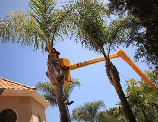 Palm Tree Trimming-Pembroke Pines FL Tree Trimming and Stump Grinding Services-We Offer Tree Trimming Services, Tree Removal, Tree Pruning, Tree Cutting, Residential and Commercial Tree Trimming Services, Storm Damage, Emergency Tree Removal, Land Clearing, Tree Companies, Tree Care Service, Stump Grinding, and we're the Best Tree Trimming Company Near You Guaranteed!