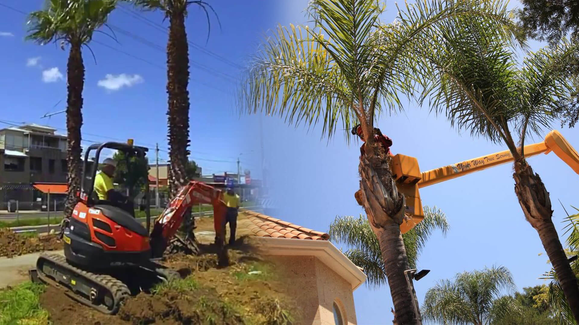 Palm tree trimming & palm tree removal-Pembroke Pines FL Tree Trimming and Stump Grinding Services-We Offer Tree Trimming Services, Tree Removal, Tree Pruning, Tree Cutting, Residential and Commercial Tree Trimming Services, Storm Damage, Emergency Tree Removal, Land Clearing, Tree Companies, Tree Care Service, Stump Grinding, and we're the Best Tree Trimming Company Near You Guaranteed!