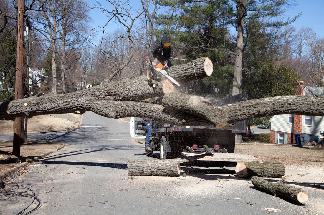 Residential Tree Services-Pembroke Pines FL Tree Trimming and Stump Grinding Services-We Offer Tree Trimming Services, Tree Removal, Tree Pruning, Tree Cutting, Residential and Commercial Tree Trimming Services, Storm Damage, Emergency Tree Removal, Land Clearing, Tree Companies, Tree Care Service, Stump Grinding, and we're the Best Tree Trimming Company Near You Guaranteed!