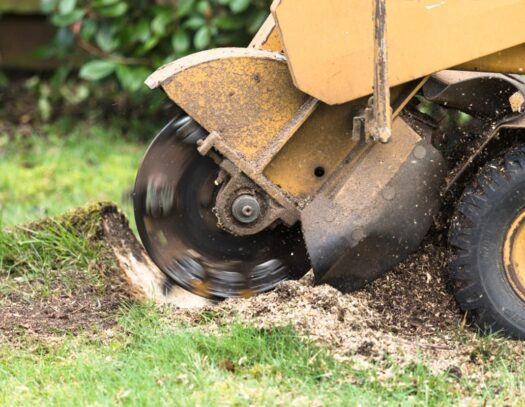 Stump Grinding-Pembroke Pines FL Tree Trimming and Stump Grinding Services-We Offer Tree Trimming Services, Tree Removal, Tree Pruning, Tree Cutting, Residential and Commercial Tree Trimming Services, Storm Damage, Emergency Tree Removal, Land Clearing, Tree Companies, Tree Care Service, Stump Grinding, and we're the Best Tree Trimming Company Near You Guaranteed!