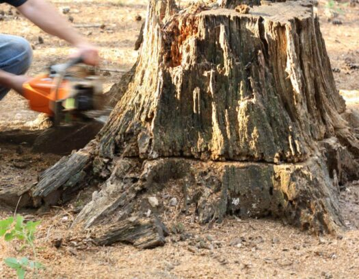 Stump Removal-Pembroke Pines FL Tree Trimming and Stump Grinding Services-We Offer Tree Trimming Services, Tree Removal, Tree Pruning, Tree Cutting, Residential and Commercial Tree Trimming Services, Storm Damage, Emergency Tree Removal, Land Clearing, Tree Companies, Tree Care Service, Stump Grinding, and we're the Best Tree Trimming Company Near You Guaranteed!