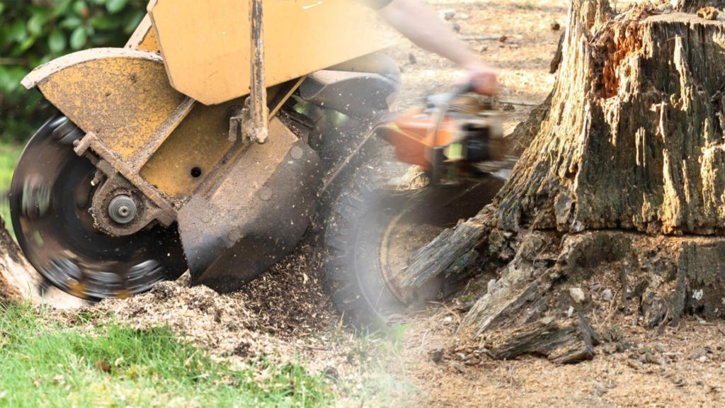 Stump grinding & removal-Pembroke Pines FL Tree Trimming and Stump Grinding Services-We Offer Tree Trimming Services, Tree Removal, Tree Pruning, Tree Cutting, Residential and Commercial Tree Trimming Services, Storm Damage, Emergency Tree Removal, Land Clearing, Tree Companies, Tree Care Service, Stump Grinding, and we're the Best Tree Trimming Company Near You Guaranteed!