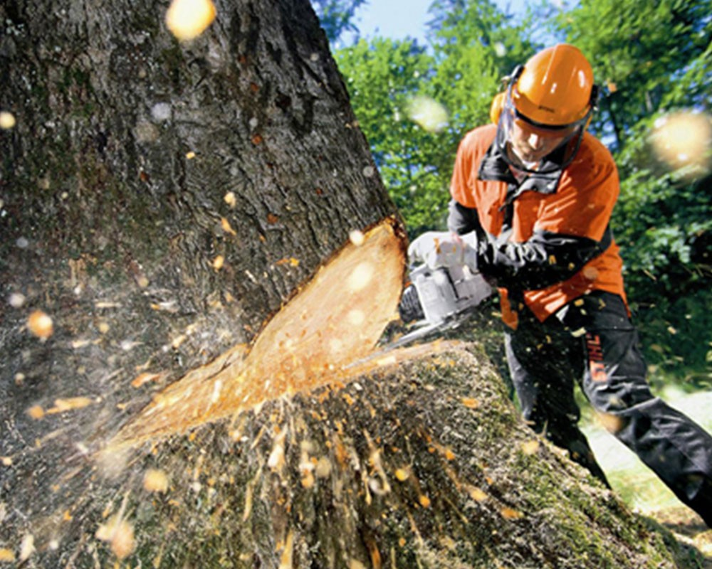 Tree Cutting-Pembroke Pines FL Tree Trimming and Stump Grinding Services-We Offer Tree Trimming Services, Tree Removal, Tree Pruning, Tree Cutting, Residential and Commercial Tree Trimming Services, Storm Damage, Emergency Tree Removal, Land Clearing, Tree Companies, Tree Care Service, Stump Grinding, and we're the Best Tree Trimming Company Near You Guaranteed!
