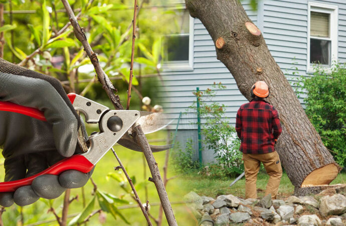 Tree pruning & tree removal-Pembroke Pines FL Tree Trimming and Stump Grinding Services-We Offer Tree Trimming Services, Tree Removal, Tree Pruning, Tree Cutting, Residential and Commercial Tree Trimming Services, Storm Damage, Emergency Tree Removal, Land Clearing, Tree Companies, Tree Care Service, Stump Grinding, and we're the Best Tree Trimming Company Near You Guaranteed!